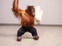 Život opice