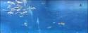 2. největší akvárium světa