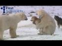 Kamarádi - Psi a Lední medvědi