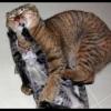 Bitka – Kočka vs. Kočka