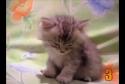 10 kočičích momentů [kompilace]