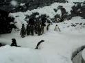 Splašený tučňák