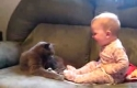 Kočka si hraje s dítětem