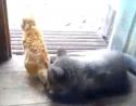 Méďa vs. kočka