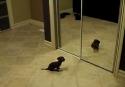 Štěně vs. zrcadlo