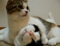 Kočičí láska