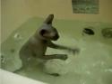 Kočka co miluje vodu