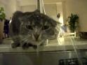 Kočka se ráda sprchuje