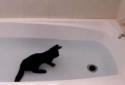 Kočka co miluje vodu 2