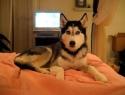Pes řekne: I love you