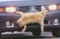 Nachytávka - kočka na nárazníku