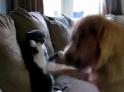 Kočka vs. pes - box