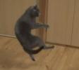Parádní kočičí skoky [slow-motion]