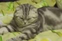 Velmi unavené koťátko