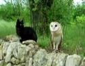 Kočka a sova - kámoši jak hrom