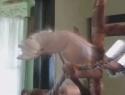 Tančící papoušci [kompilace]