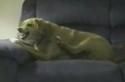 Schizofrenní pes