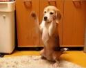 Štěňátko se učí chytat míček
