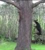 Pes vs. veverka
