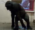 Gorilí breakdance