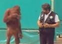 Kompilace opic a opičáren