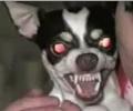 Šílení psi [kompilace]