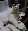 Když kočku svědí zadek