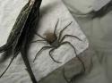 Nešikovný pavouk
