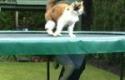 Kočka na trampolíně