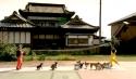 Světový rekord - 13 psů skáče přes lano