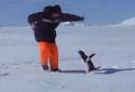 Tučňák útočí
