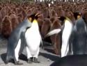 Tučňák mafián