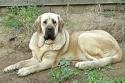 Pes, nelepší přítel člověka