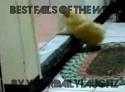 Nejlepší faily 1. týdne října 2011