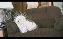 Nabitý pes