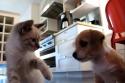 Nejroztomilejší koťátka a štěňátka