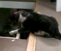 Zlomyslná kočka