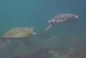 Nefalšovaný želví High five