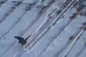 Klouzající se vrána