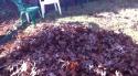 Pes v listí
