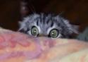 Hororová kočka