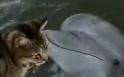 Kočka s delfínem