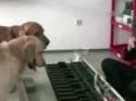 Psi s hudebním sluchem