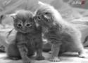 OBRÁZKY - Ze života zvířátek 8.díl