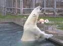 Hrátky s ledním medvědem