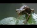 Epická žába