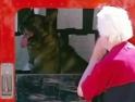 Nachytávka - Pes pošťák