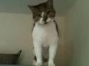 Antigravitační kočka