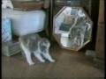 Největší blbci - Kočky v akci