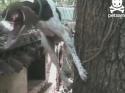 Neuvěřitelný útěk psa